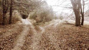 Кръстопът в гората на Витоша